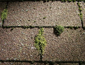 A well maintained roof is free from moss.